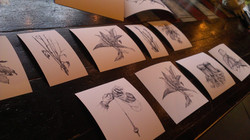 Hand drawings of plants and spinning