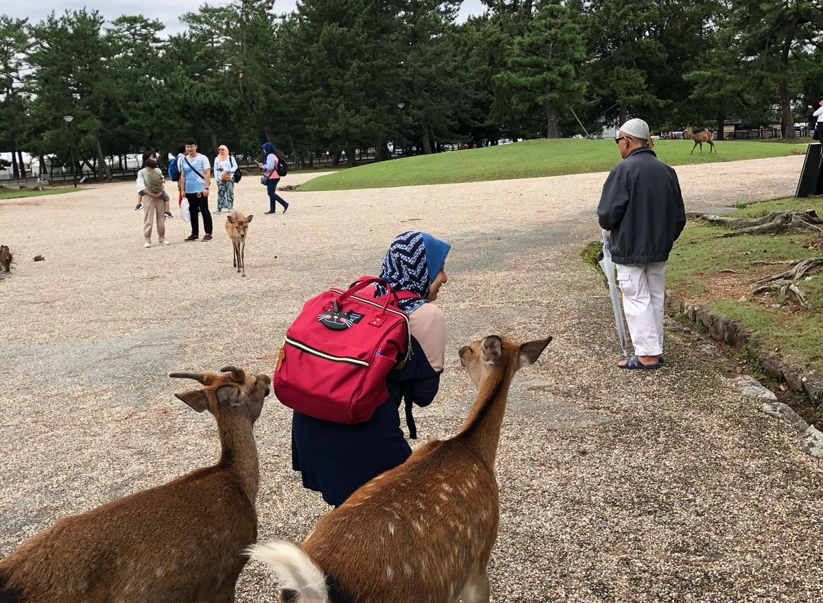 Rusa Jinak Nara Park