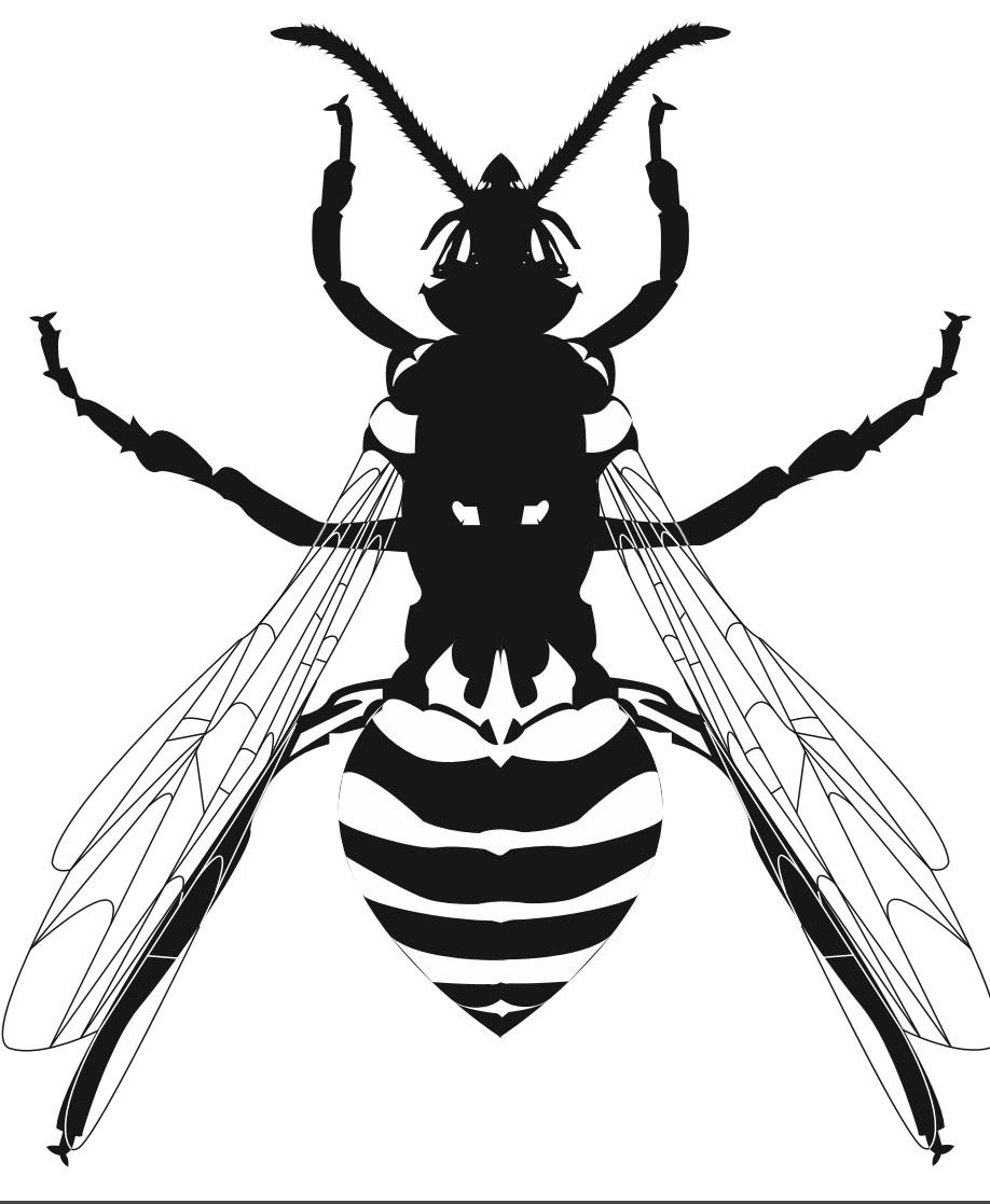 Bird Skull Wasp