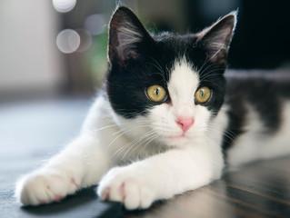 3 Tips for Beginner Cat Training
