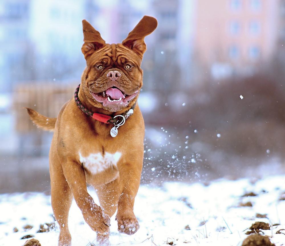 Dog Enjoying Winter