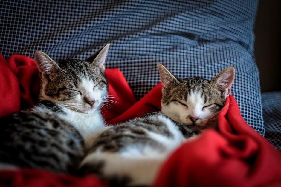Two Cat Best Friends