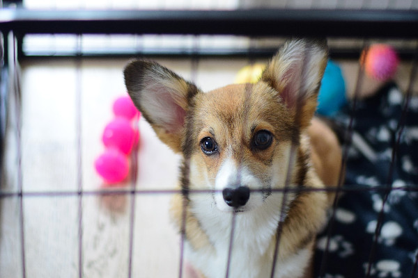 How to get you dog crate trained