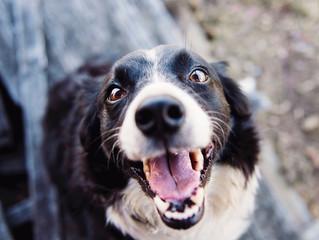 How to Fix Doggie Bad Breath