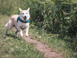 Build a Backyard Fitness Course For Your Dog