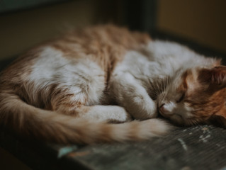 How To Help Your Cat Avoid Cabin Fever