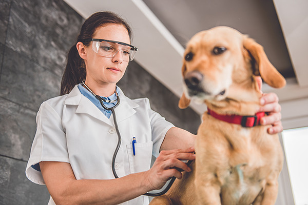 Taking Your Dog to The Vet