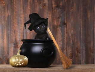 Keep Your Cat Calm This Halloween