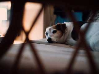 How to Keep Your Dog Happy Indoors