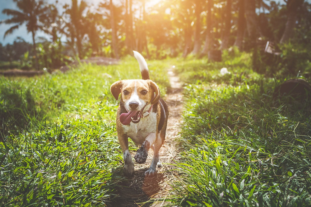 Healthy Happy Dog