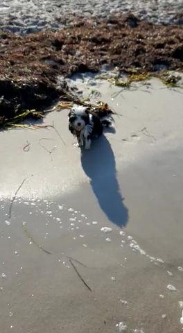 Aika - eine kleine Seehündin