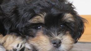 Wann bin ich  für die Anschaffung eines Hundes geeignet?