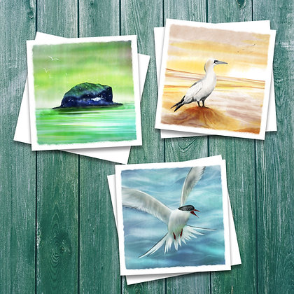 6 pack of seabird cards