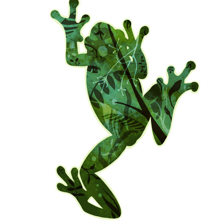 Rainforest treefrog