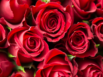 5 Most Popular Flowers Used in Perfumery and our Top Perfume Picks