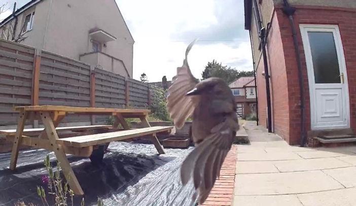 Sparrow poses.jpeg