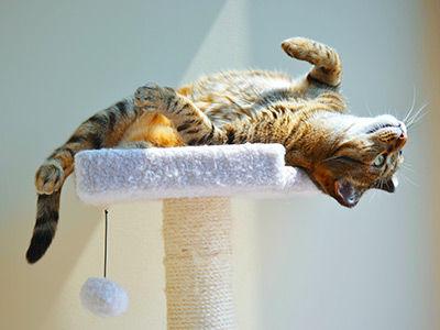 cat-boarding-1.jpg