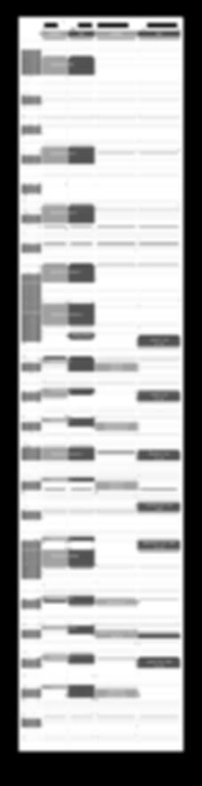 kalendarzima1819-01-02.png