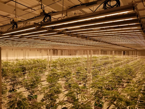 Cannabis Lighting & Technology Company GrowRay Technologies Invests in Sustainable Solutions in 2020