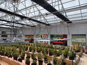 GrowRay Technologies Teams Up With Don Carlos To Produce High Quality, Sustainable Cannabis