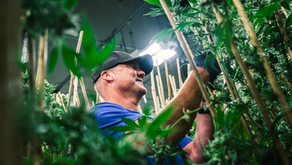 Craft Beer Trailblazer Dale Katechis Joins Veritas Fine Cannabis to Drive Strategic Growth