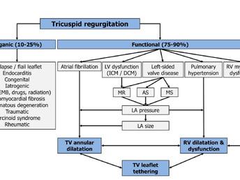 Treatment Options for Severe Functional Tricuspid Regurgitation