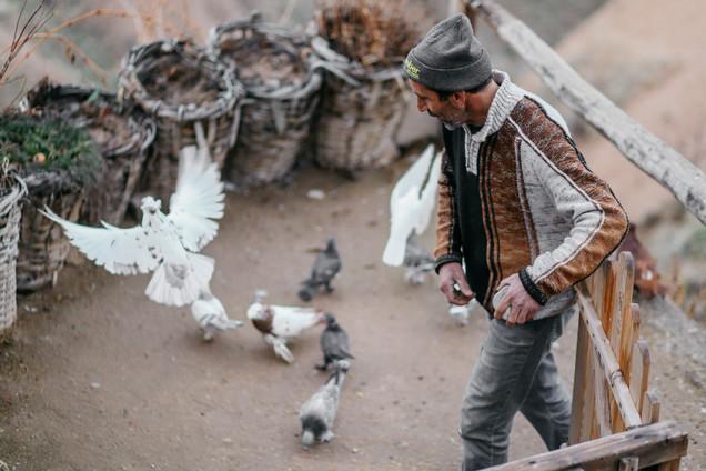 PIGEONS OF CAPPADOCIA