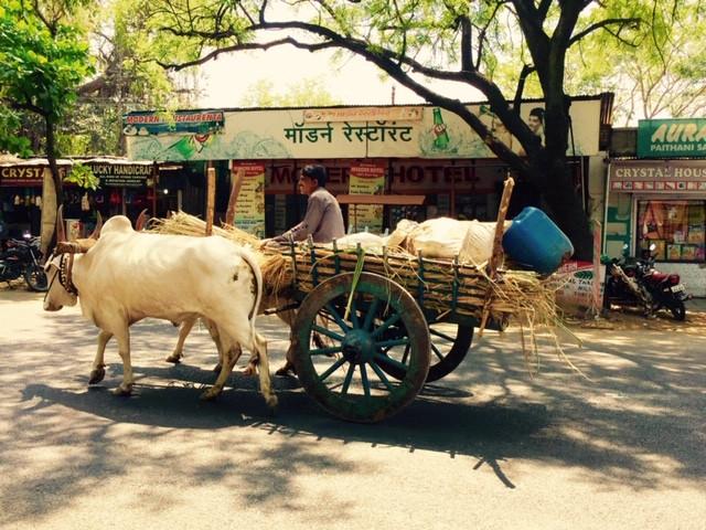 Bullock cart in India