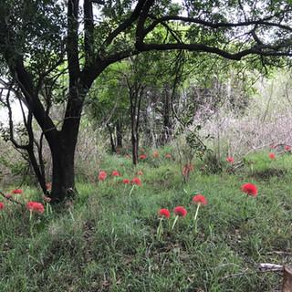Victoria Falls undergrowth