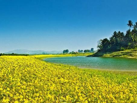 Eden, move over for the Garden of Assam