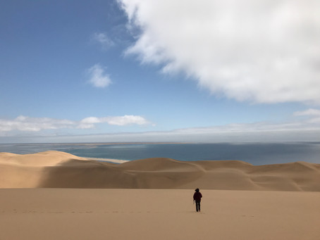 Dunes, desert, and ingenious wildlife