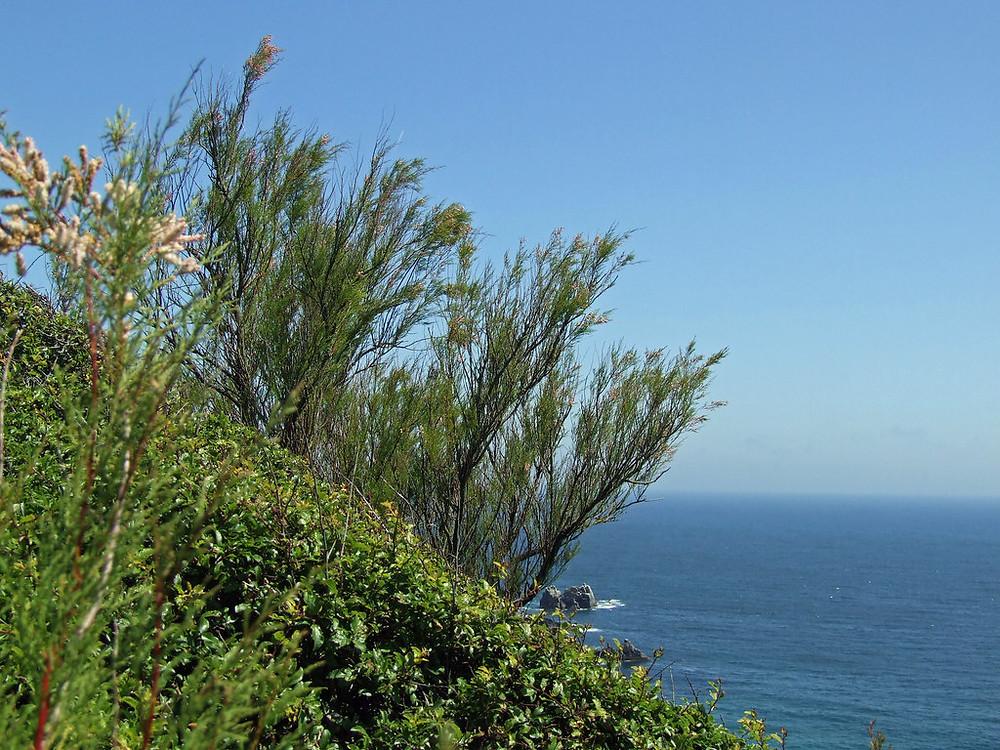 Clifftop scrub garden