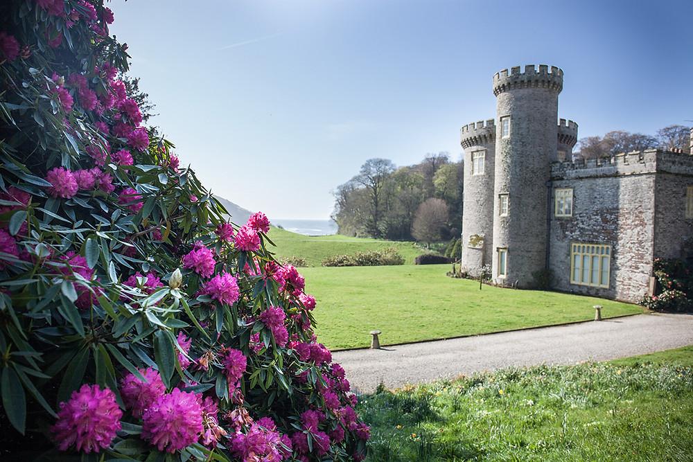 Rhododendron heaven, Caerhays Castle