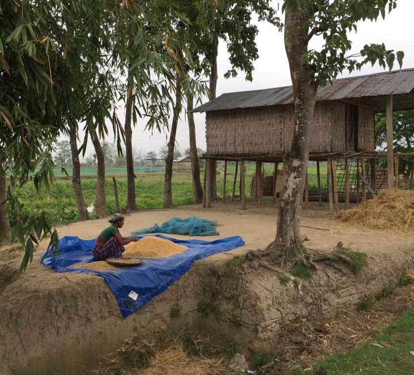 Misshing tribal woman husking rice on banks at Brahmaputra