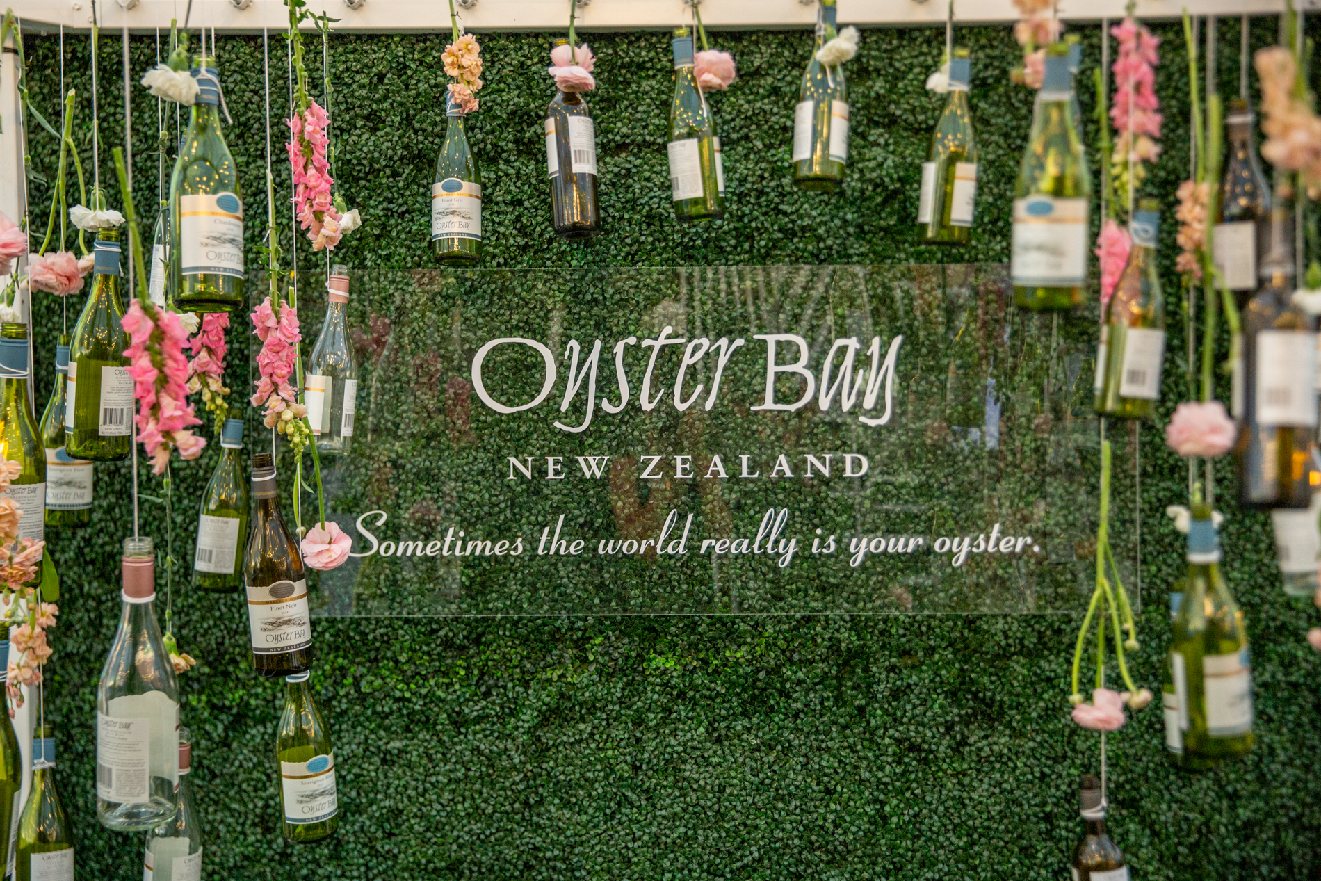 Oyster Bay Rose' Launch