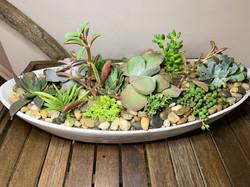 Beautiful Succulent Arrangement