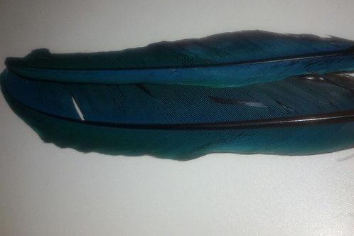 Agbê - Pena Azul - Unidade