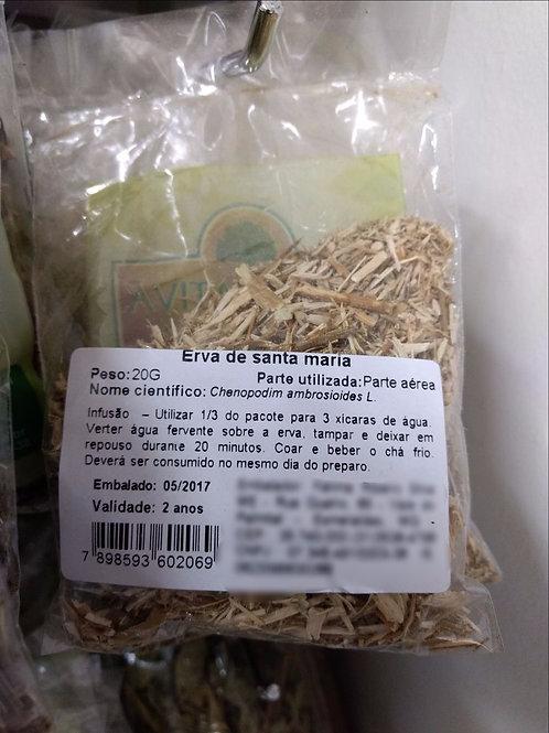 Erva de Santa Maria - Mastruço - Erva Medicinal - Chás e Banhos - Alternativa