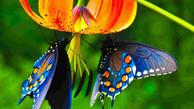 A medicina da borboleta
