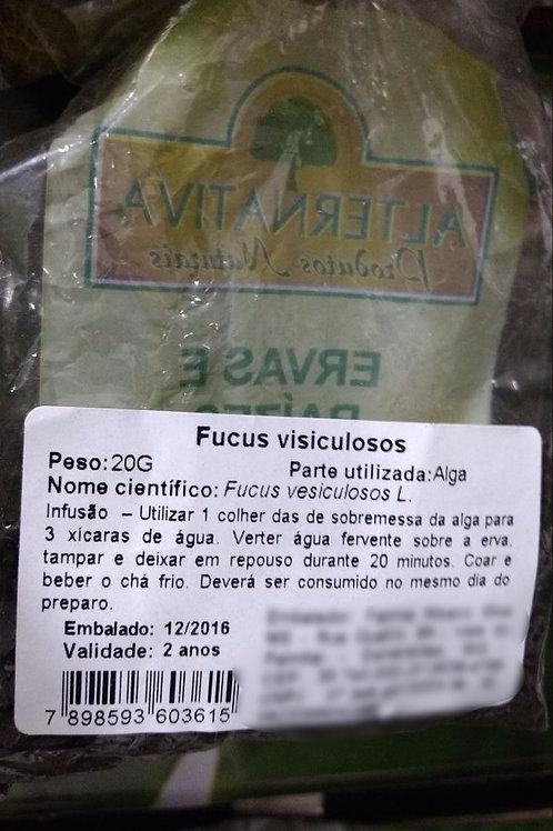 Fucus Vesiculosos - Erva Medicinal - Chás e Banhos - Alternativa