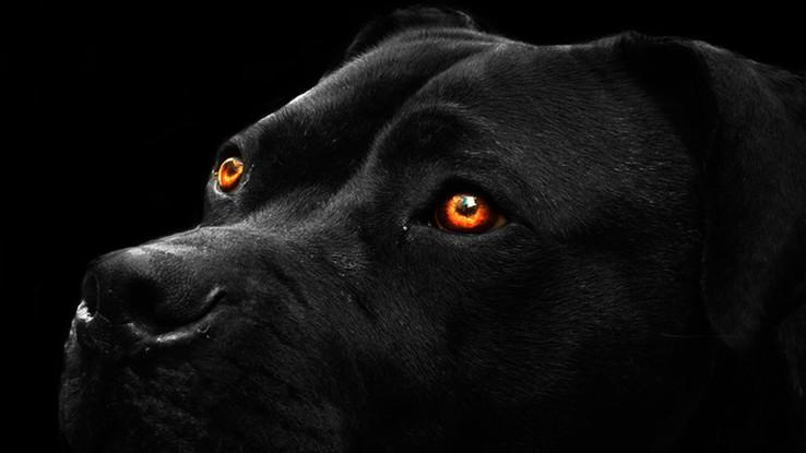 Xamanismo: O Animal Sombra