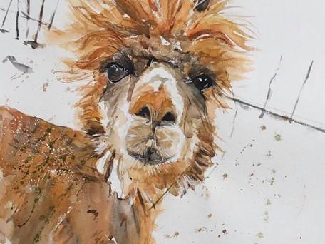 Gertie the Alpaca