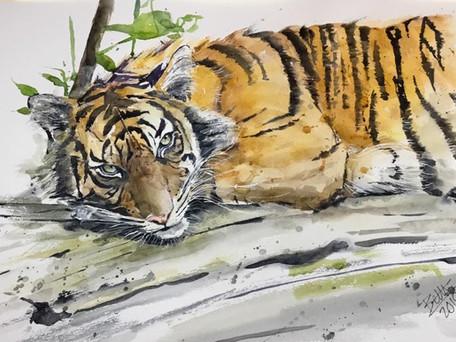 """Tiger, """"I'm watching"""""""