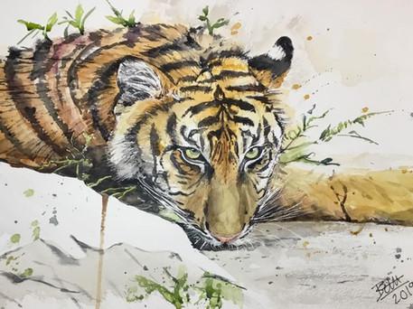 """Tiger, """"still watching"""""""