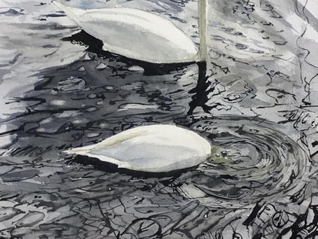Ducking Swan and reflections