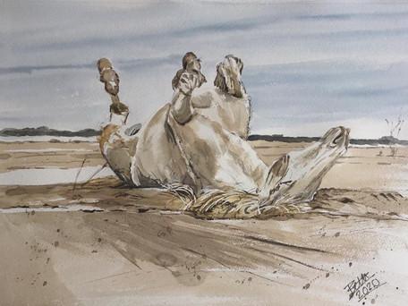 Horse play 1
