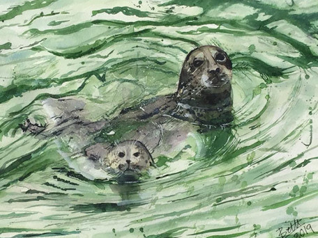 Seal Mum and her pup