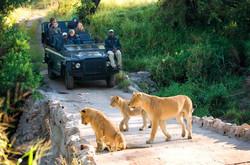 Drive in Kruger National Game Park