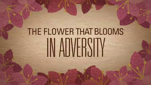 Blossom Kinetic Typography
