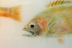 MaryLou Wilhelm, fish print on sillk